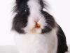 Miffy 06