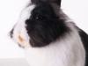 Miffy 07