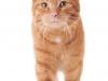 Garfield 01