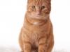 Garfield 03