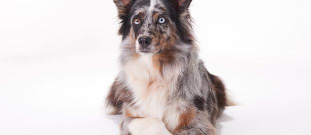 Tiermodellagentur Ute Woelki Modellagentur Fur Tierische